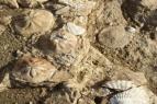 Giunone Società Cooperativa - Geopaleosito Genoni - Oristano - Sardegna - Italy